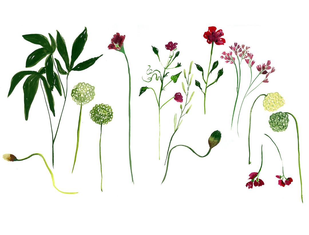 Cassandre Montoriol Montagut floral composition
