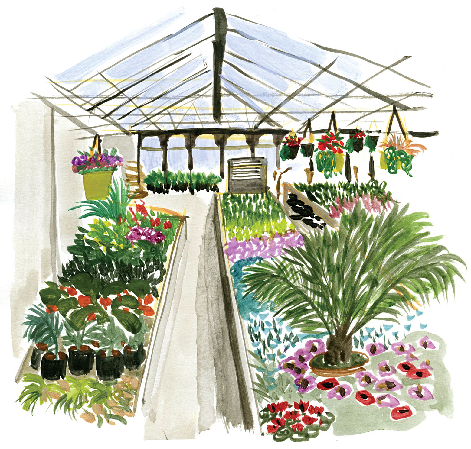 Greenhouse drawing Cassandre Montoriol