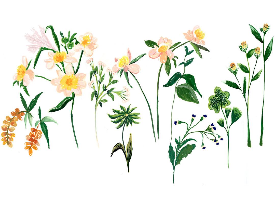 drawing Cassandre Montoriol Montagut floral compositon