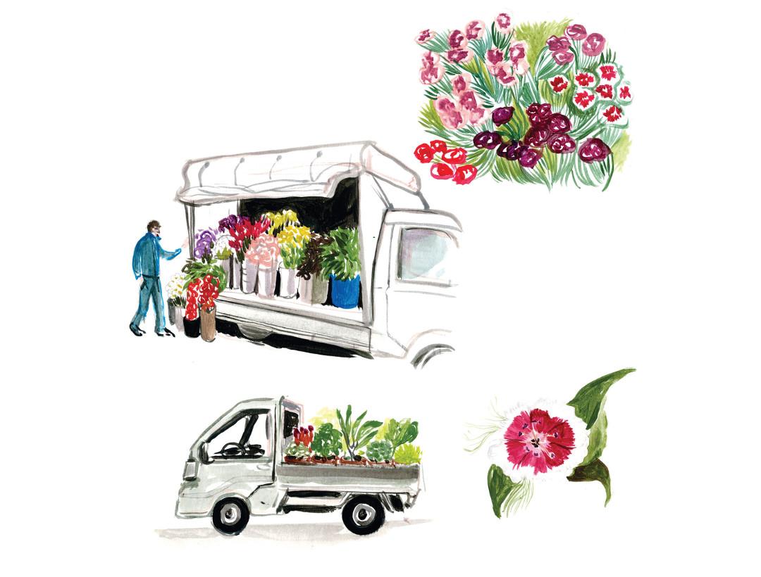illustration fleurs Cassandre Montoriol